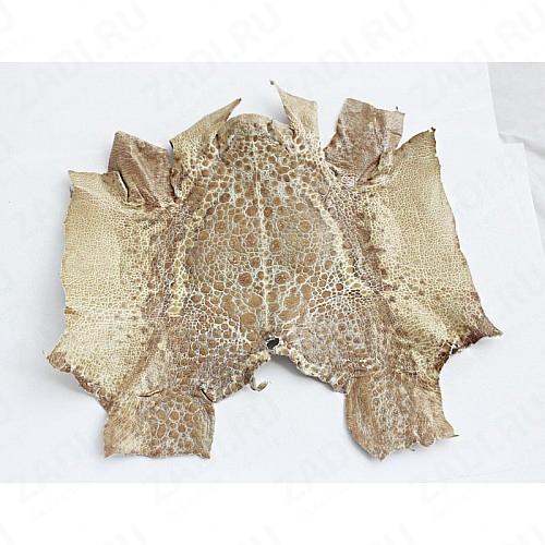 Кожа лягушки натуральная 20х10см песочная
