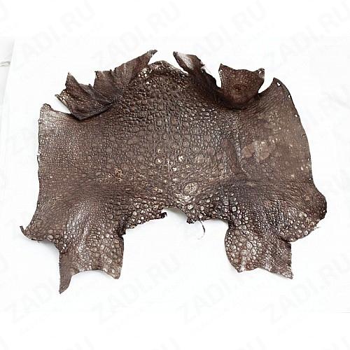 Кожа лягушки натуральная 20х10см коричневая